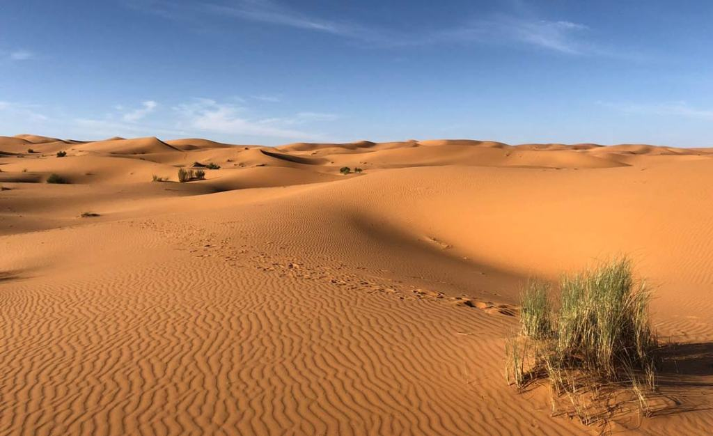 Desert sand oasis of flesh colour with clear blue sky.