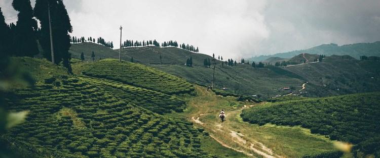 Nepal tea: More than Darjeeling's Himalayan cousin