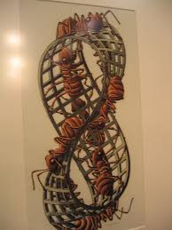 Mobius strip II red ants by Escher