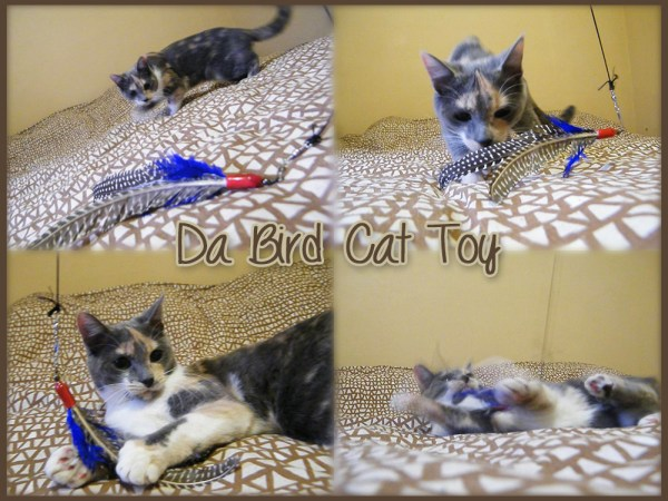 Izzy Playing With Da Bird Cat Toy