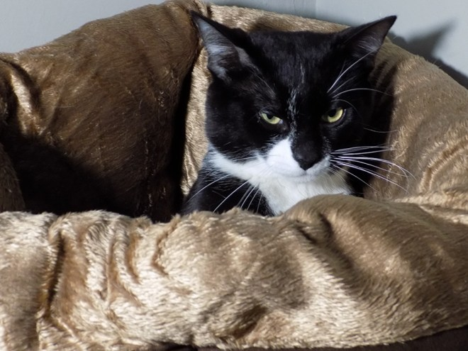 Avon Cat Bed - Jazz Woke Up