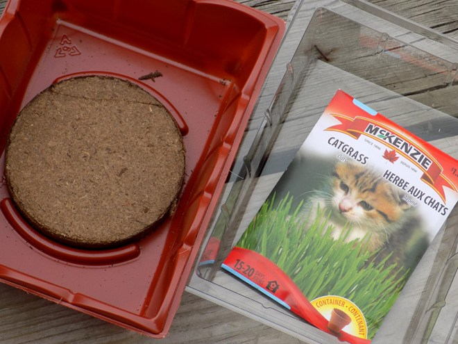Jiffy Cat Grass Review - Whats In the Box