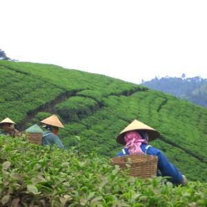 Buy Eight Treasure Tea in the United States