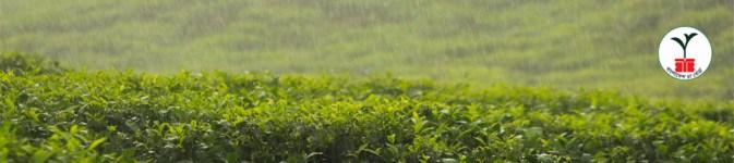 BANGLADESH TEA BOARD JOB CIRCULAR 2018 by dailyjobsbd