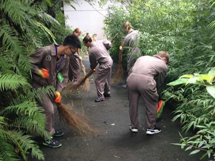 Volunteers cleaning up for pandas
