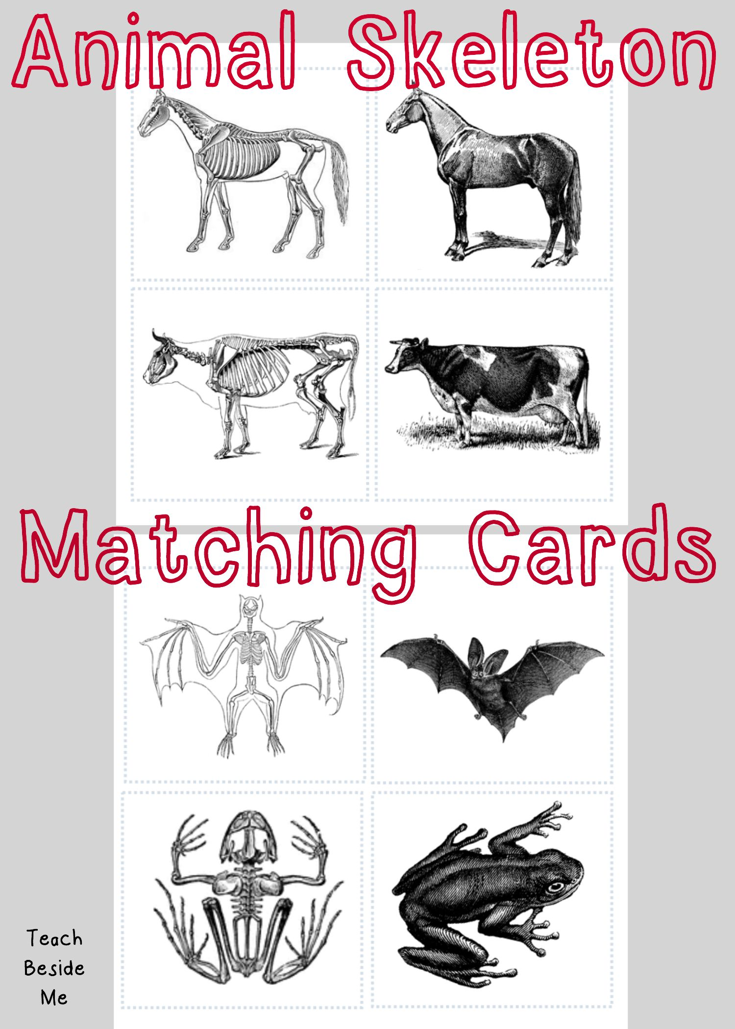 Animal Skeleton Matching Cards