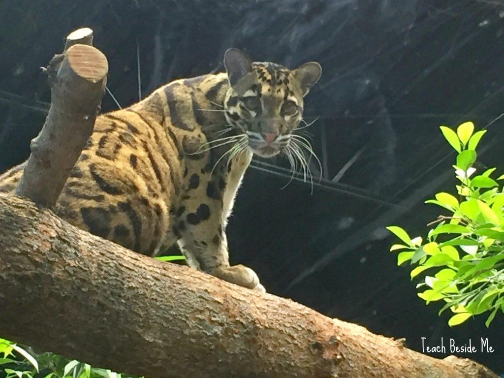 Aquarium Trip Amp Animal Habitats Sorting Mats