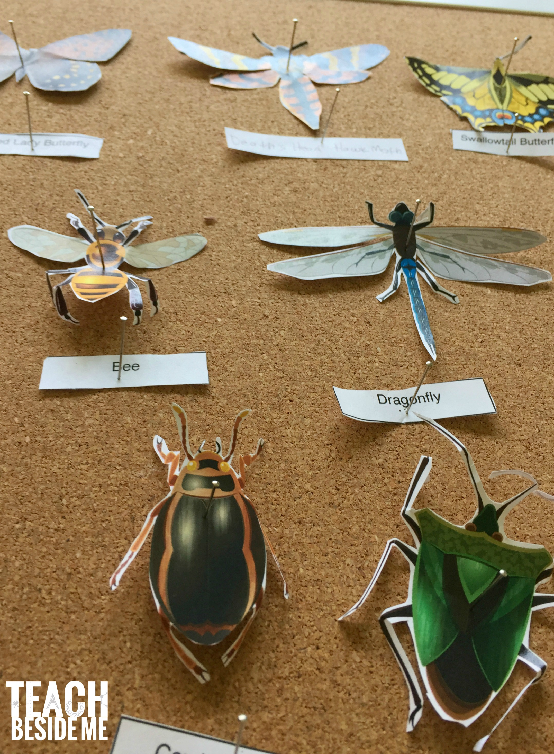 Printable Paper Insect Display