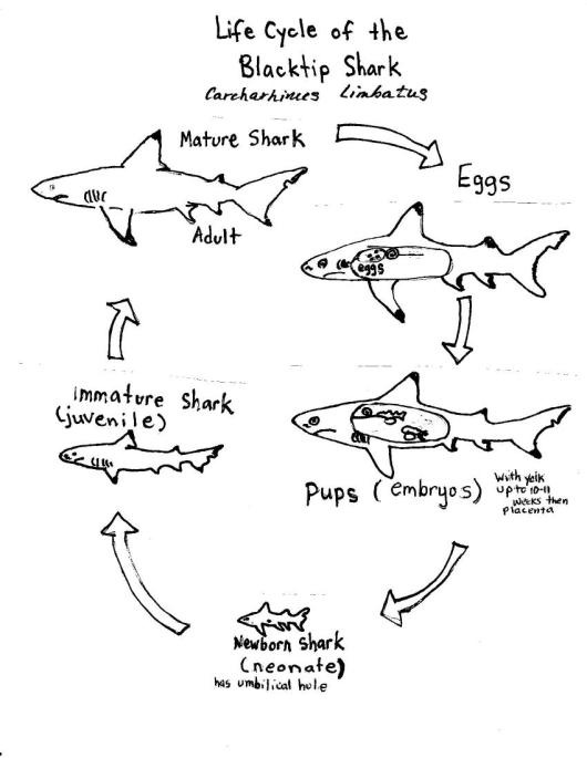 life cycle | NOAA Teacher at Sea Blog
