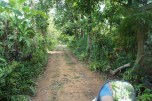 the front way to our jungle home