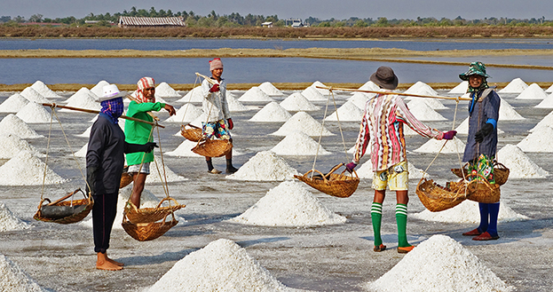 Human Consumption Salt-crop