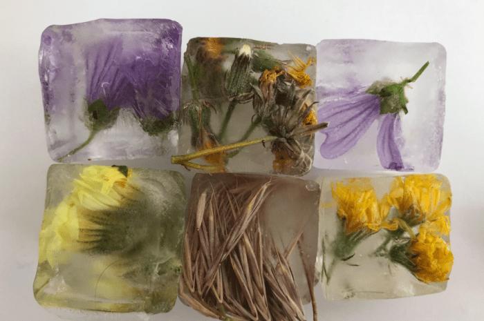 Cuadernos botánicos. Huellas de naturaleza.