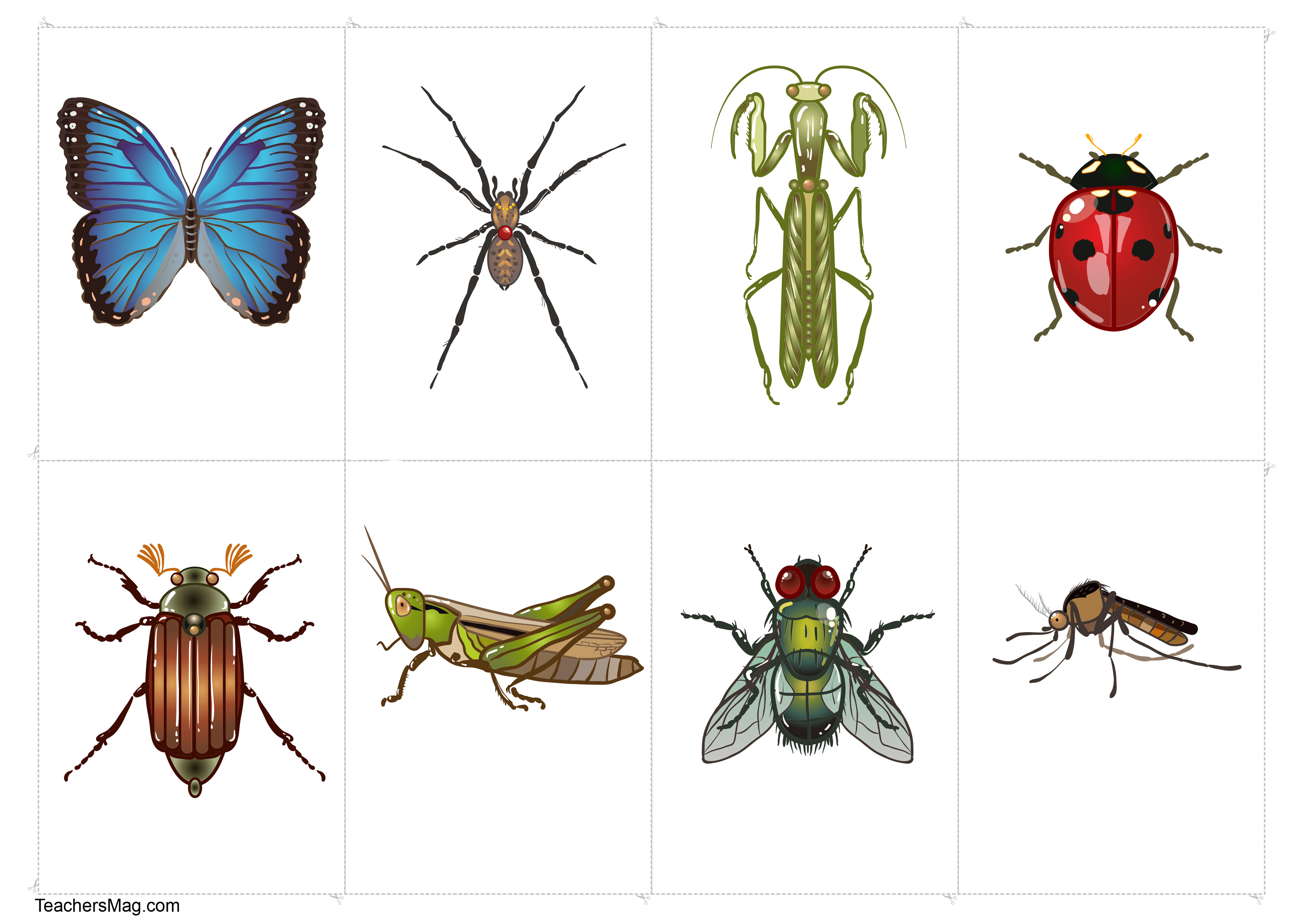 Science Learning About Insects