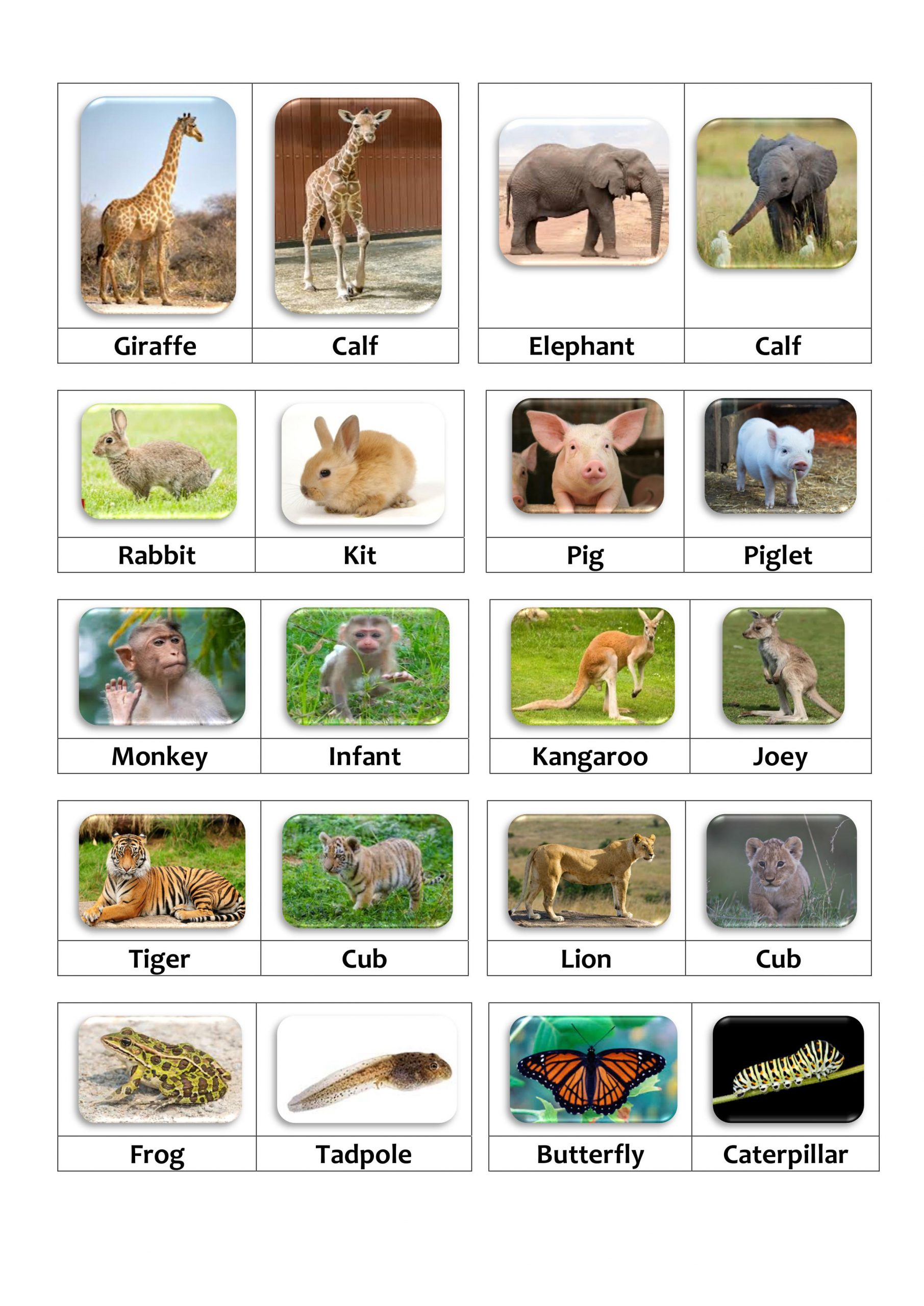Matching Activity Animals And Their Young