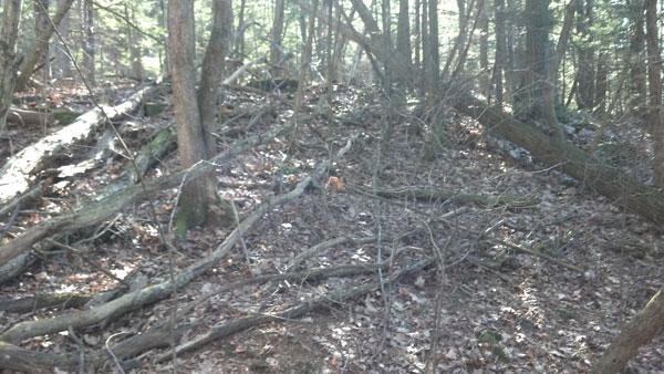 woods_one