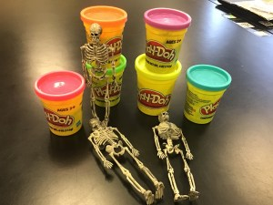 Use play doh to teach the major muscle groups!