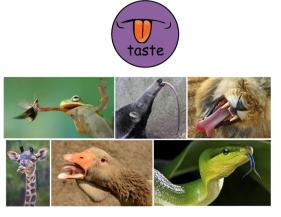 taste animals