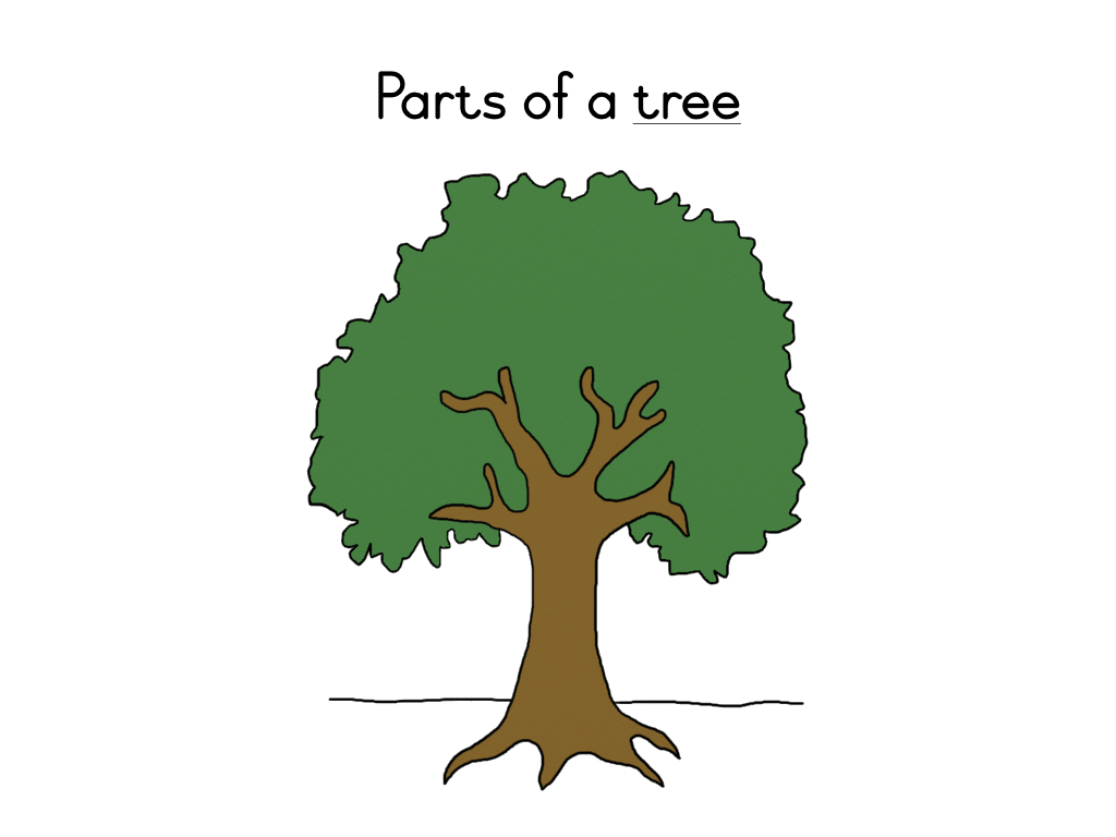 Parts Of A Tree Definition Booklet Teacha
