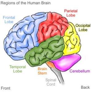 Underprivileged Child's Brain   How Teachers Approach