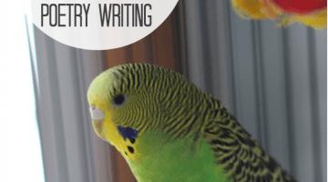 kid-happy poetry writing haiku and cinquain