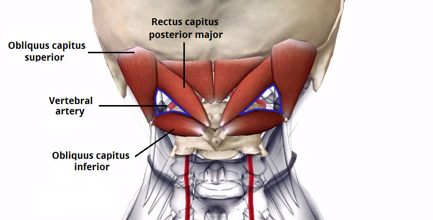 Image result for Suboccipital triangle