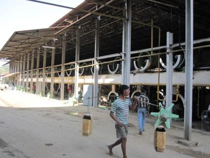 Tea processing factory