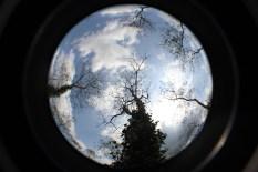 Looking up - shade tree canopy