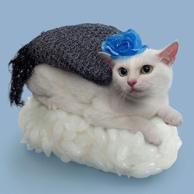 SushiCat13