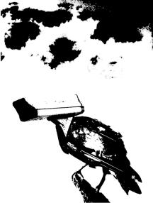 CCTV Crow Perched