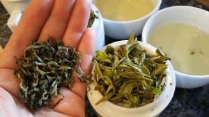 Photo: Examining the transformation of green tea sample, from dry to infused.