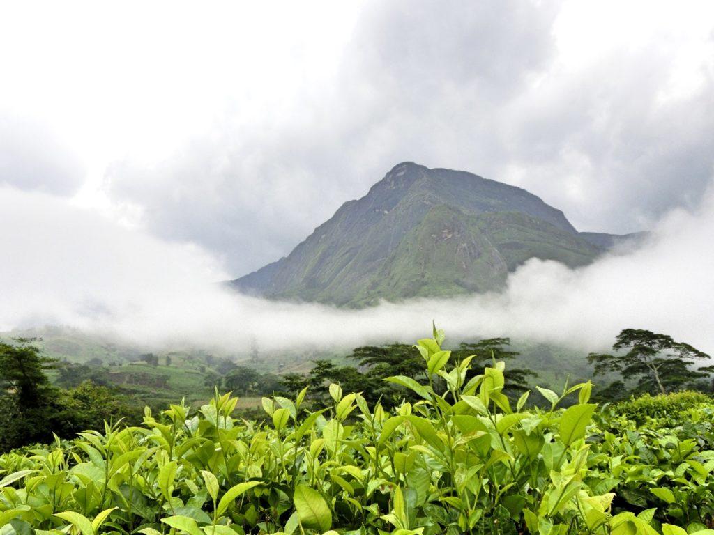 tj2_harvest16_malawi_mulanji-mountains_peak_by-ranjitdasgupta