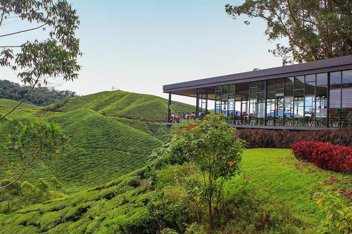 Malaysia is a good destination for tea tourists