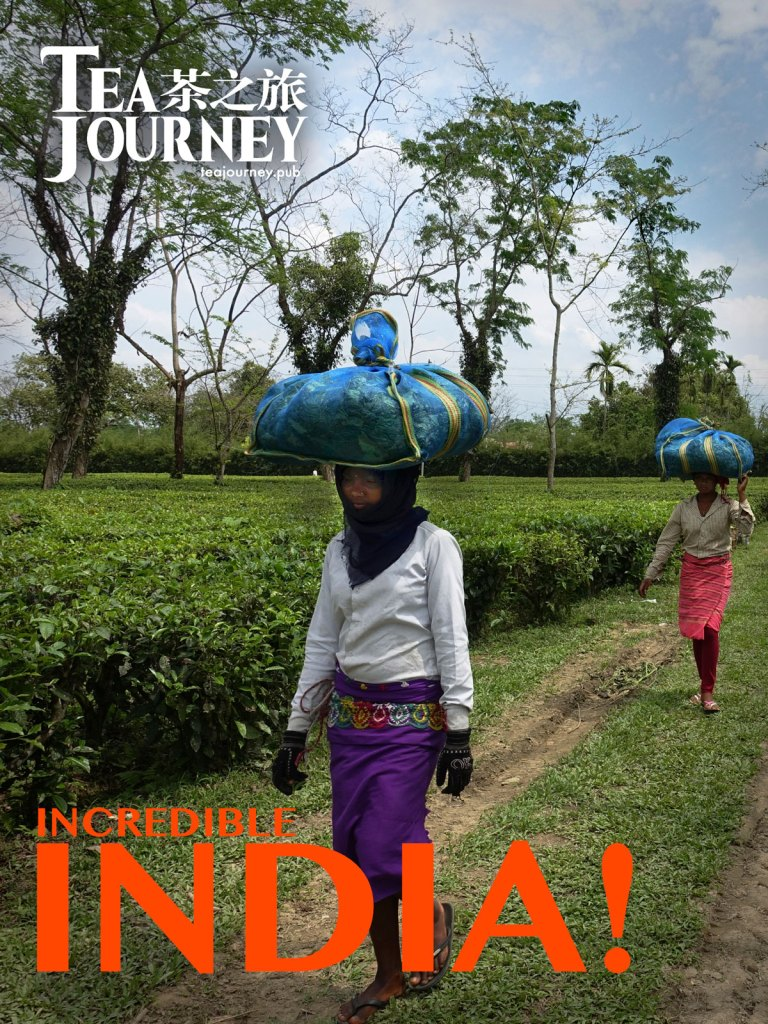 Tea Journey Magazine - Shifts the focus from tins to terroir   from