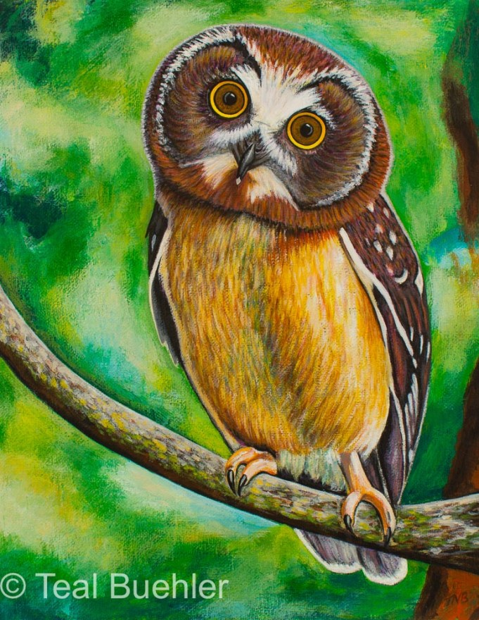 Owl - 11 x 14 Acrylic on Canvas Board