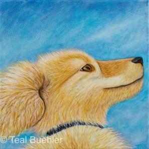 Happy Dog - 12 x 12 Acrylic on Canvas