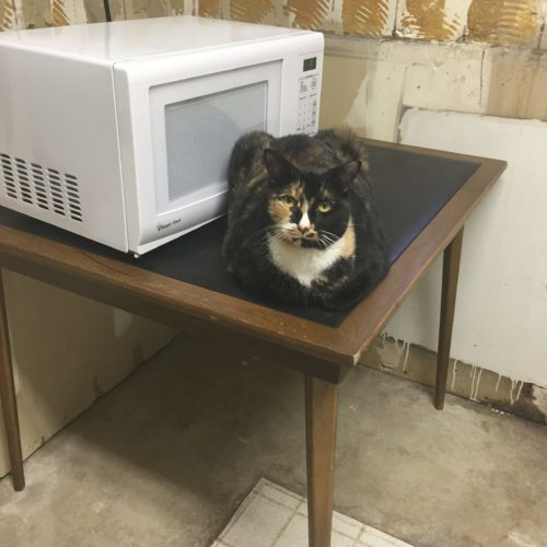 Tabitha with the Microwave