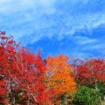 秋の澄んだ空が綺麗ですね✨
