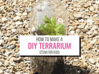 Text: How To Make a DIY Terrarium Garden for Kids Picture: Soda bottle terrarium with plant inside