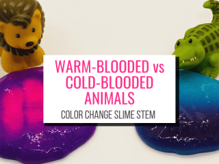 Text: Warm-Blood vs Cold-Blooded Animals Color Change Slime STEM. Picture: Toy lion by purple slime that turns pink, alligator by blue slime that turns purple