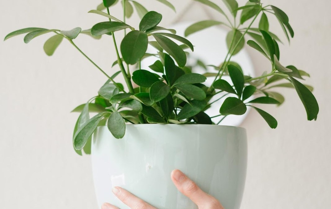 7 Tips to Improve Indoor Air Quality