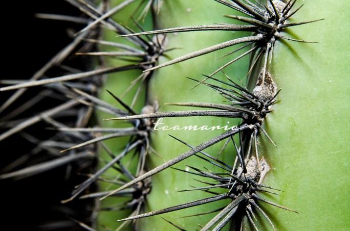0 cactus