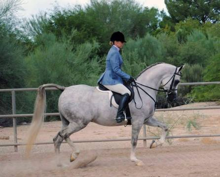 KM Iceman Arabian Gelding by KM Bugatti