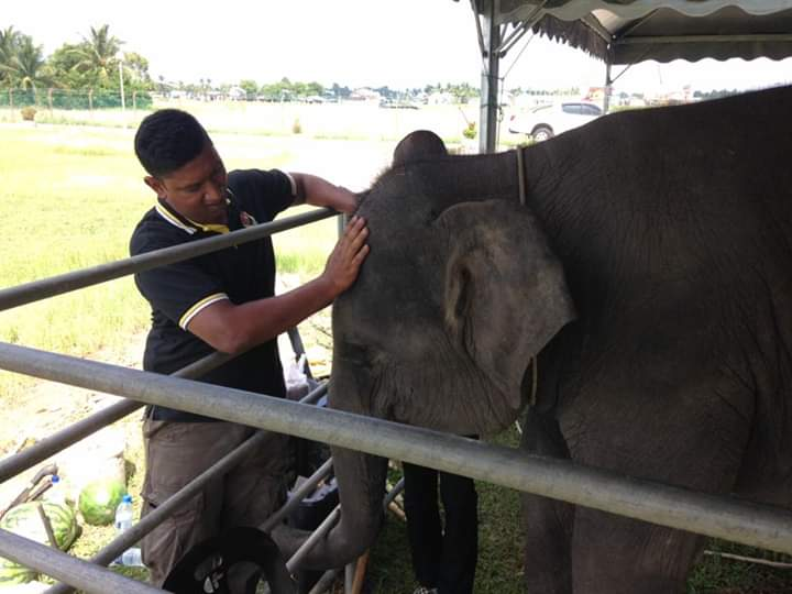 abam_tiger_with_the_elephant