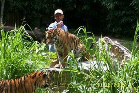 meet_abam_tiger_mr_zulkafli_shamsudin