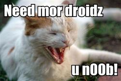 My very own Lolcat