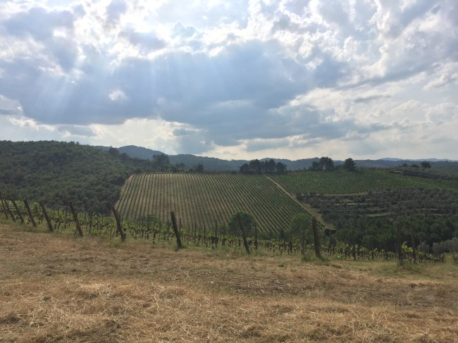 The vines of the Petrolo Estate