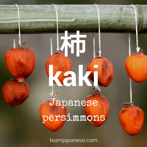 kaki - the Japanese word for persimmon. Seasons are very important in Japan. Japanese people honour the changing seasons with special food, drink, festivals and customs. And of course, there are special seasonal words too! Increase your Japanese vocabulary with this list of Japanese words and phrases for autumn and fall. Click through to the blog post on Team Japanese to learn more autumn Japanese words now!