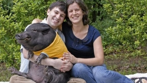 bad family photos, pig portraits fail! Awful and funny