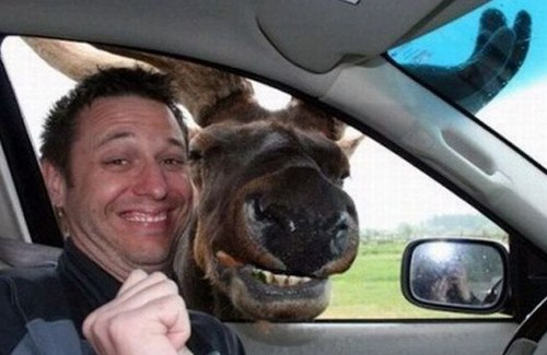 Moose Smile Photobomb Funny Pictures Random Humor Epic Fails worst family photos bad family photos weird worst tattoos bad tattoos stupid people crazy people funny names funny memes animal memes awkward family photos Funny Memes horrible goofy people of walmart