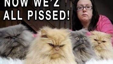 Grumpy Cats Wee'z all Pissed Funny Pictures Random Humor Funny memes Crazy Bizarre Stupid Weird People Funny Sayings Awkward Family Photos Worst